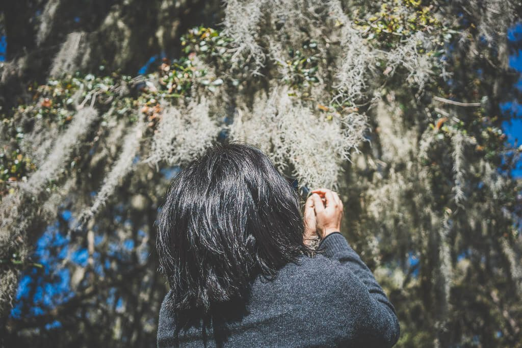 Charleston itinerary, Magnolia plantations, top things to do in Charleston