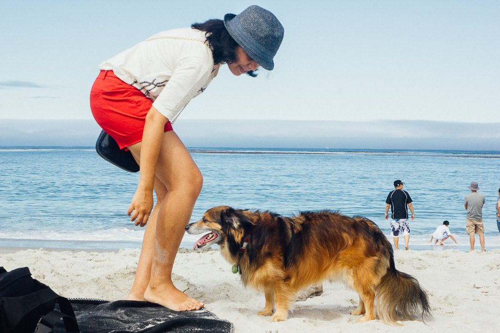 top dog friendly beaches in California, beaches that allow dogs, California dog beaches, beach vacation with dogs, pet friendly beaches in California