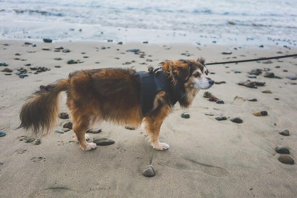 Dog friendly beaches in Cayucos, near San Luis Obispo