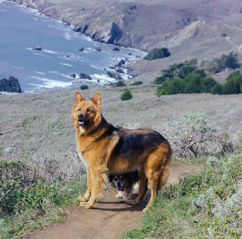 Muir beach lookout, Marin headlands, San Francisco Bay Area