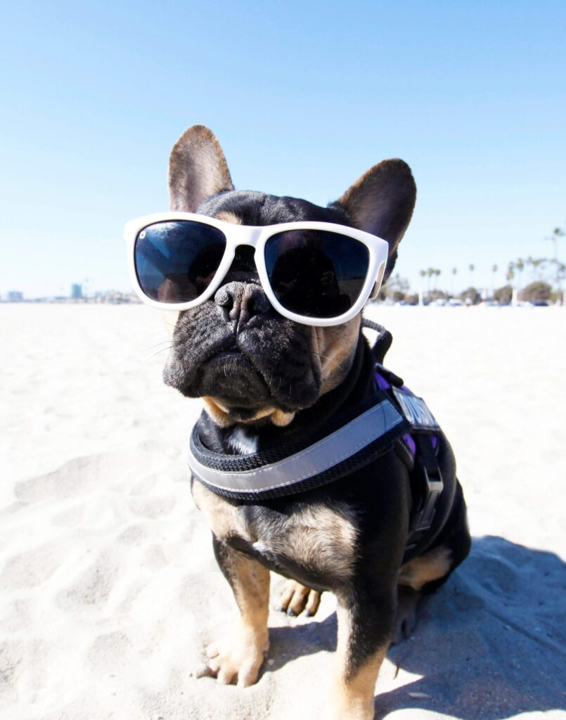 dog friendly beaches in Long Island, Los Angeles county