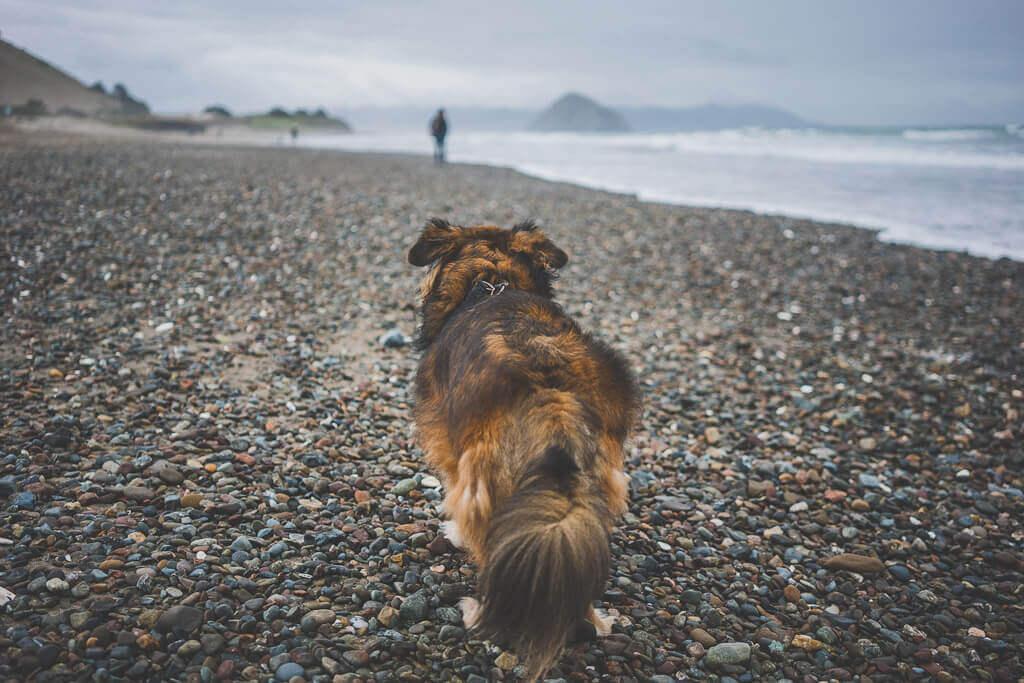 Morro Bay dog beach is an off-leash dog beach