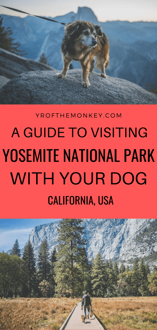 Wondering what to do with your dogs in Yosemite National Park, California? Then read this guide by a seasoned traveler dog mom on all the places in Yosemite and hiking trails where dogs are allowed. Plus great info on dog friendly hotels and restaurants in Yosemite. Pin this to your USA or dog friendly travel board now! #dogfriendly #yosemite #USA #California #nationalparksofUSA #petfriendly #travelwithdogs #pettravel #dogfriendlynationalparks #hikingwithdogs