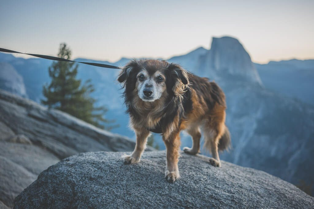sunrise at Glacier point, one dog friendly place in Yosemite
