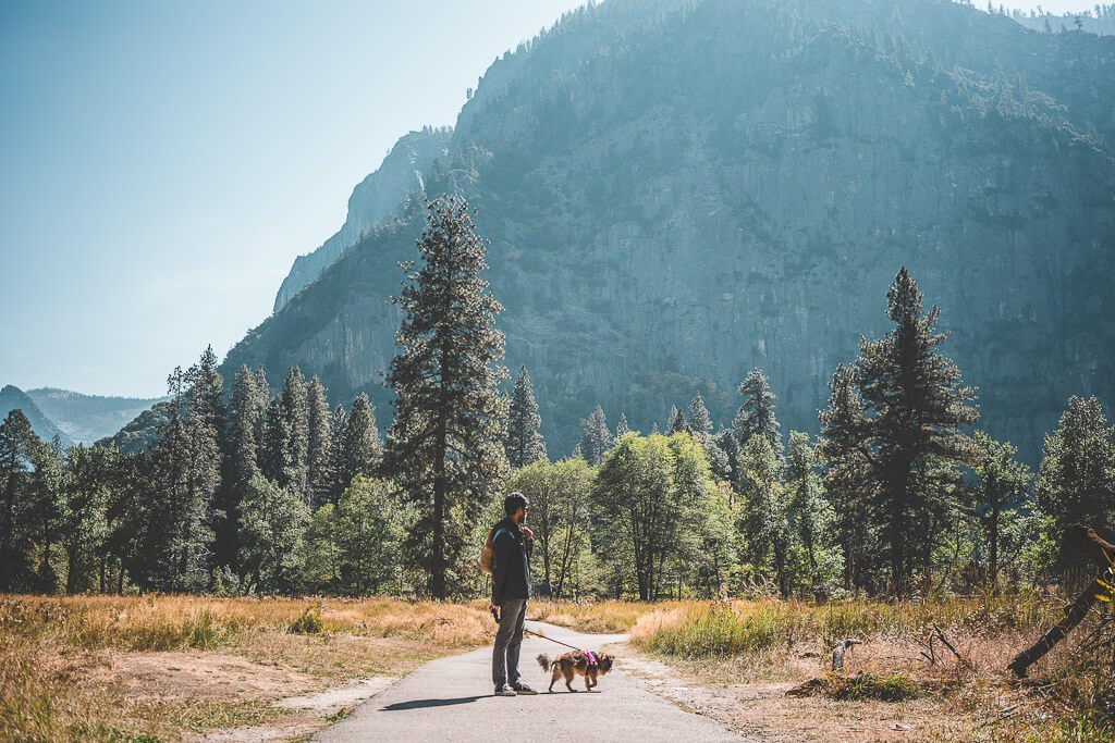 Where to take your dogs in Yosemite National Park: a complete guide on dog friendly hiking trails in Yosemite, dog friendly restaurants and where dogs are allowed in Yosemite