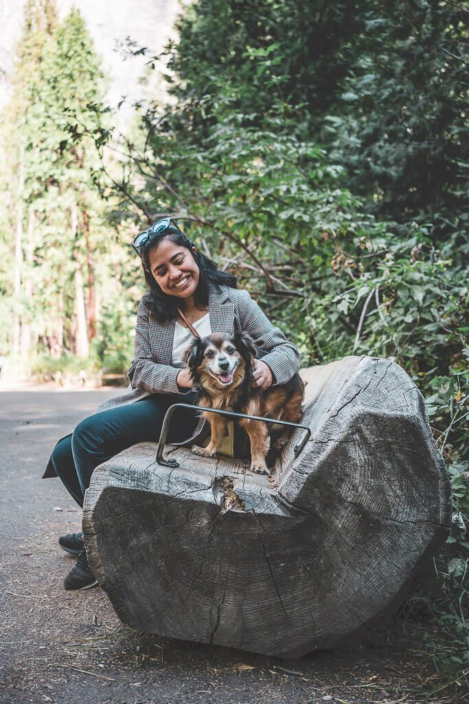 dogs are allowed on the Lower yosemite fall trail