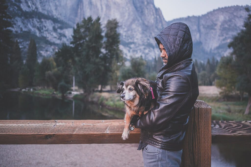 dogs in yosemite, where can you take your dog in Yosemite