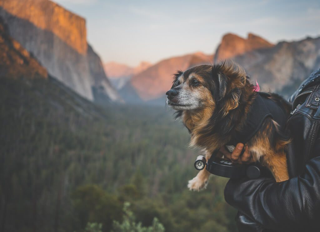 hiking with dogs in Yosemite, dog friendly Yosemite hiking trails, Tunnel view
