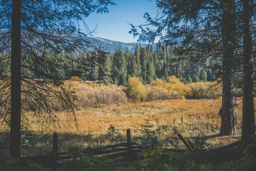 dogs on Wawona meadow loop, dogs in yosemite, where to take your dog in Yosemite