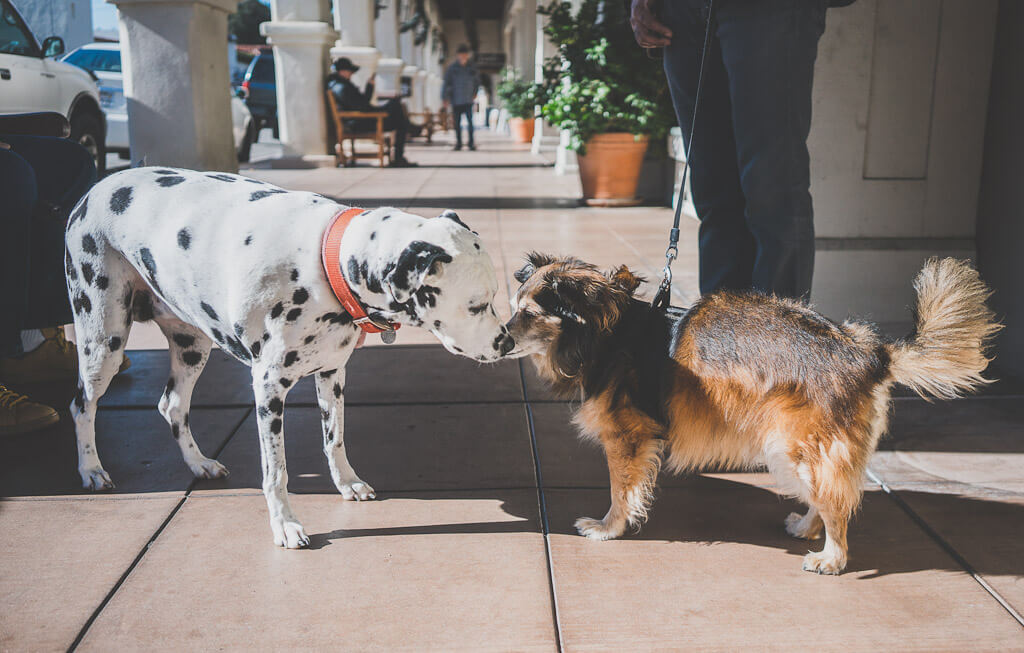 Santa Barbara is an excellent dog friendly getaway in Southern California