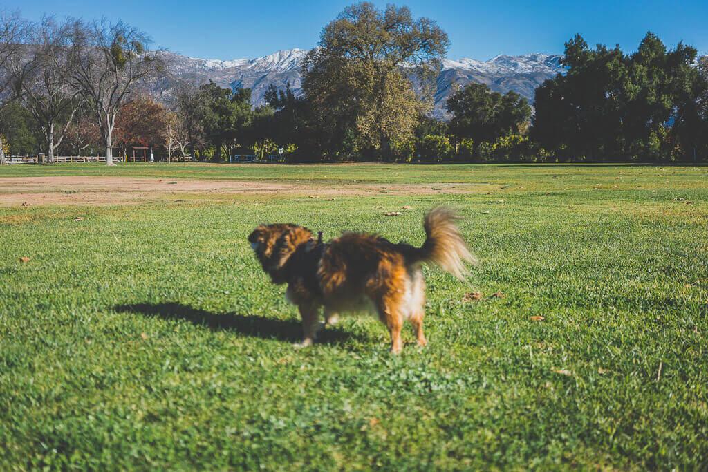 Ojai dog parks