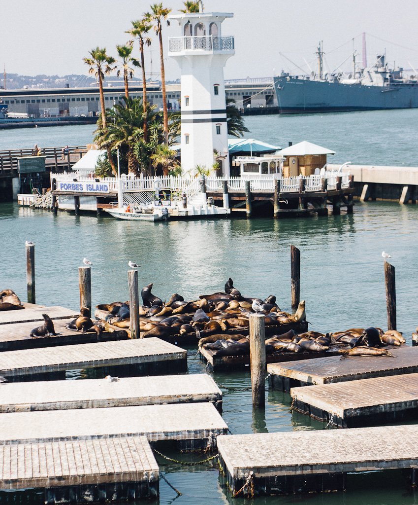 Visit Fisherman's Wharf during a San Francisco layover