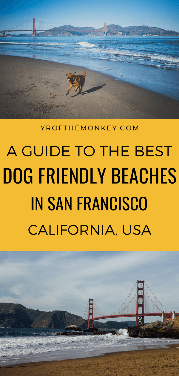 This is a local dog mom's guide to the best dog friendly beaches in San Francisco, California. Read this guide to find the best dog beaches in SF and pin it to your USA or California board. #dogfriendlybeaches #SanFrancisco #USA #California #dogfriendlyvacation #dogbeaches #Californiabeaches #dogfriendly #travelwithdogs