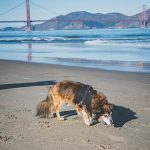 dog friendly beaches in San Francisco