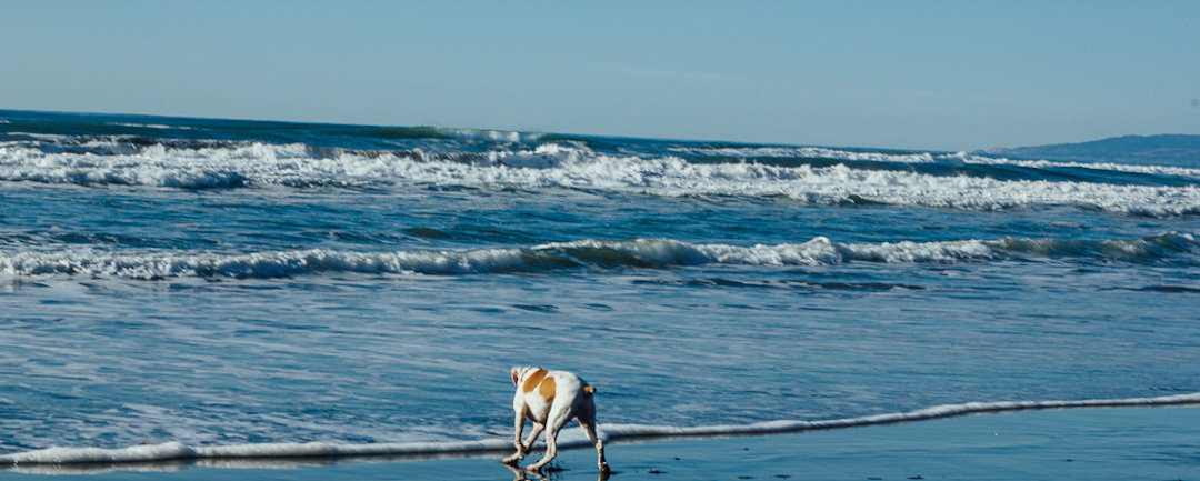 Fort Funston is an off-leash dog beach in San Francisco