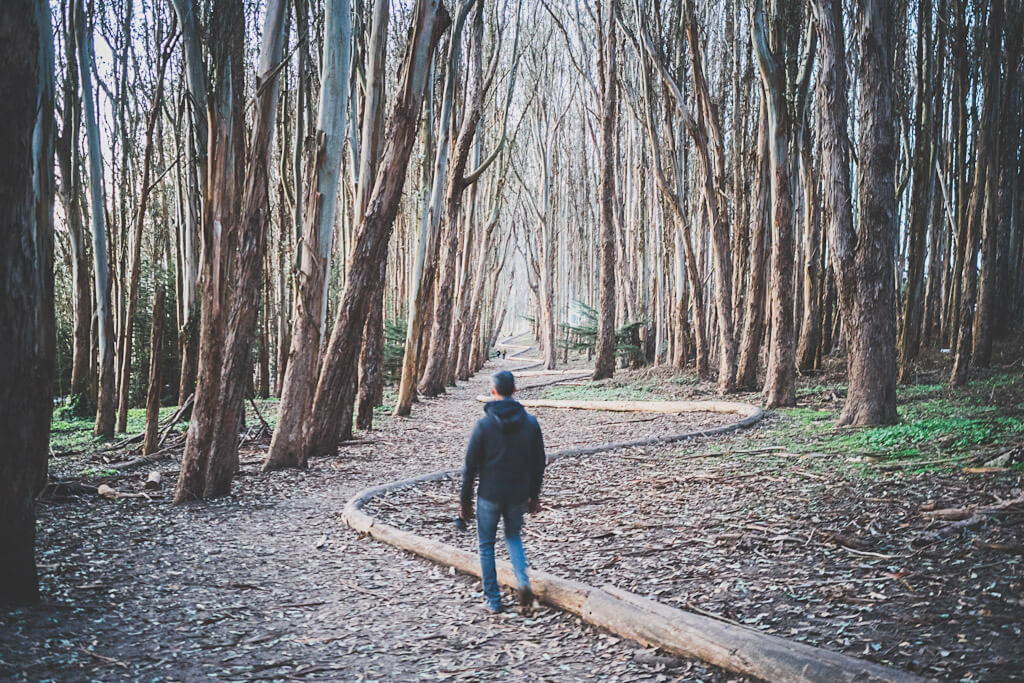 Wood Line in Presidio is next to Lover's Lane