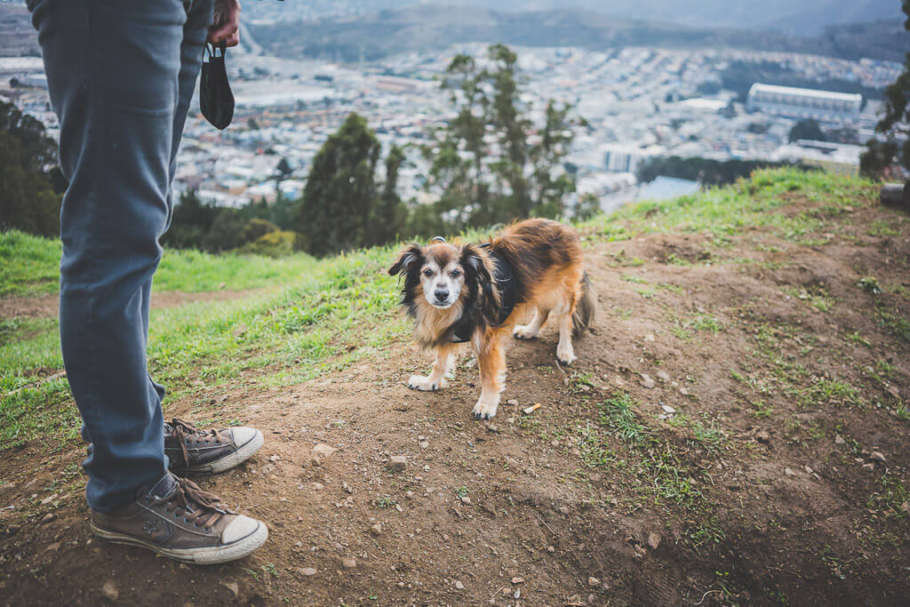 Dog hiking on Philosophers Trail in John McLaren Park San Francisco
