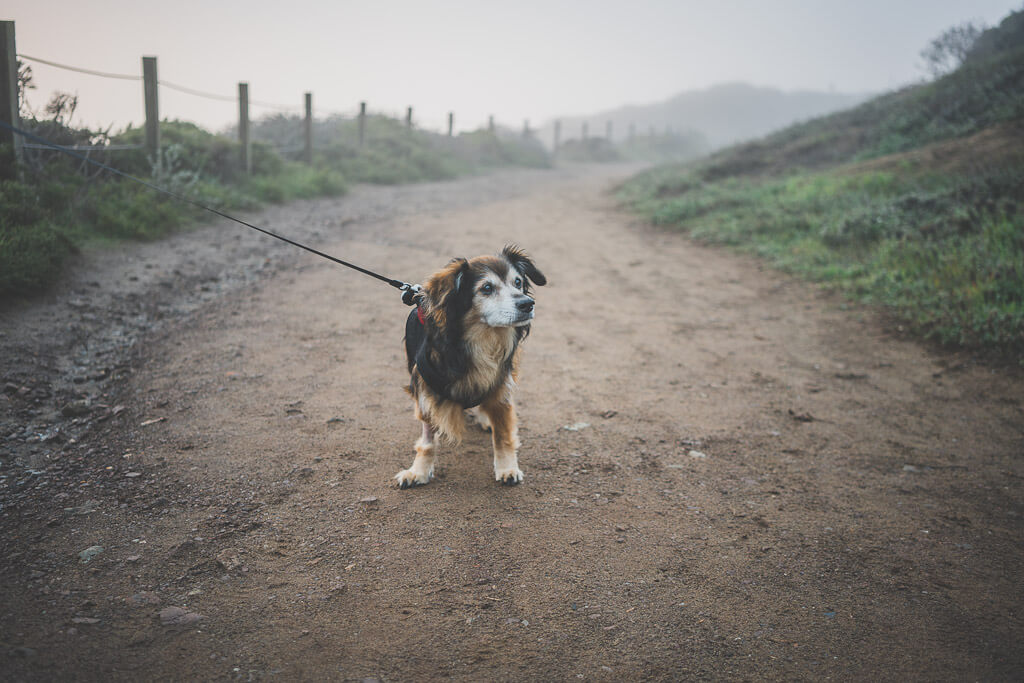 Dog friendly hikes Bay Area, dog friendly hiking in Bay Area