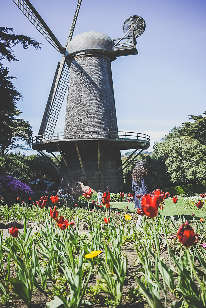 hidden gems in San Francisco: Dutch Windmill in Golden gate Park