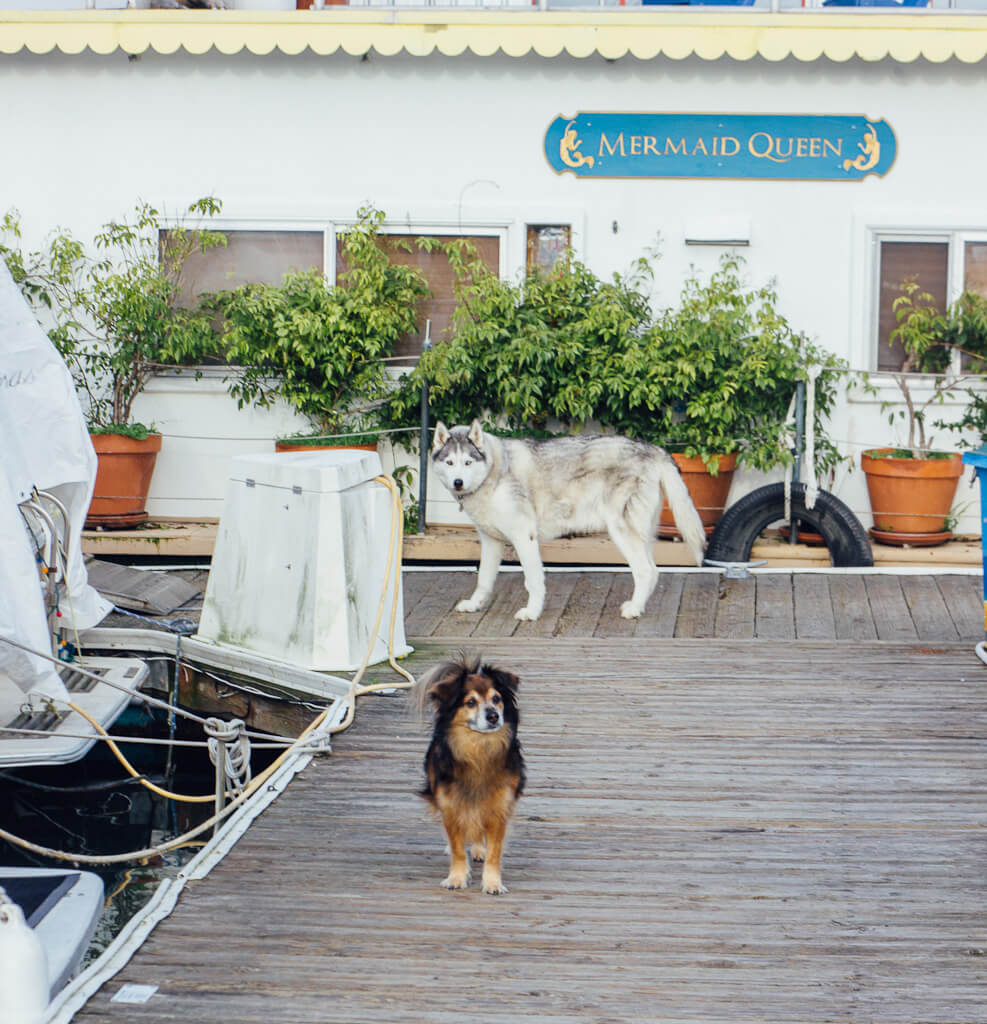 dog friendly Airbnbs and vacation rentals