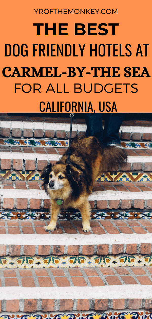 Looking for the best dog friendly hotels in Carmel? Then read this post on the best places to stay in Carmel by the sea with your dog to suit all budgets! Pin this pet friendly Carmel Hotels guide to your California or USA board now! #dogfriendlyhotels #USA #America #Carmelbythesea #California #travelwithdogs #dogfriendlyvacation #Californiatravel #dogfriendlyguide