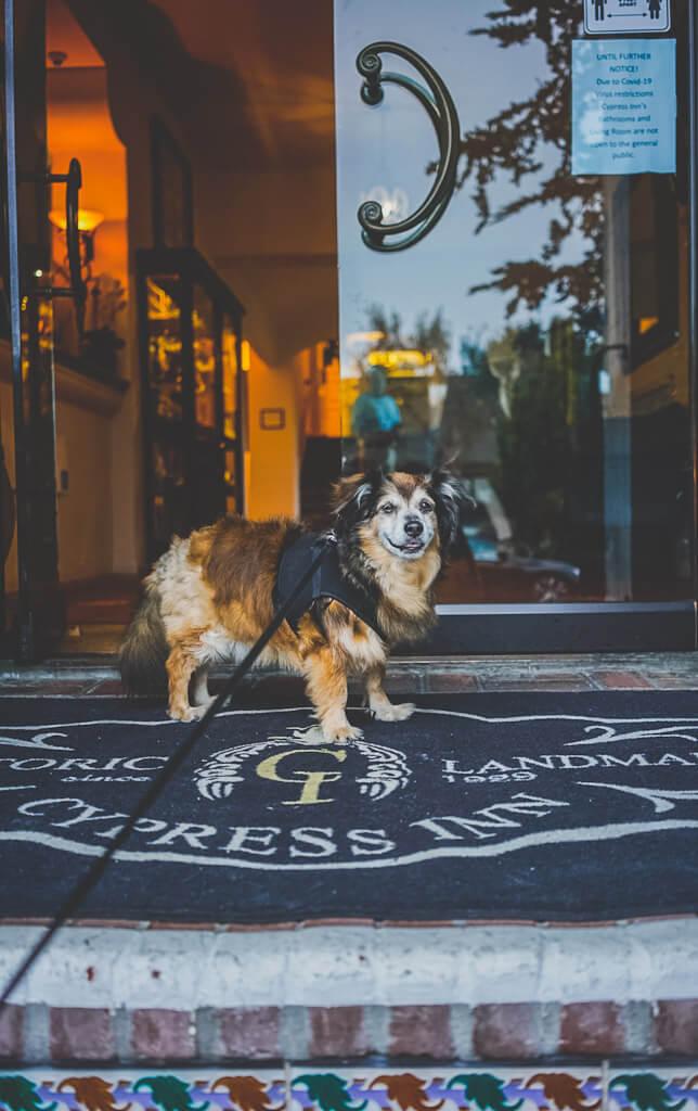 Cypress Inn is a dog friendly boutique hotel in Carmel by the Sea