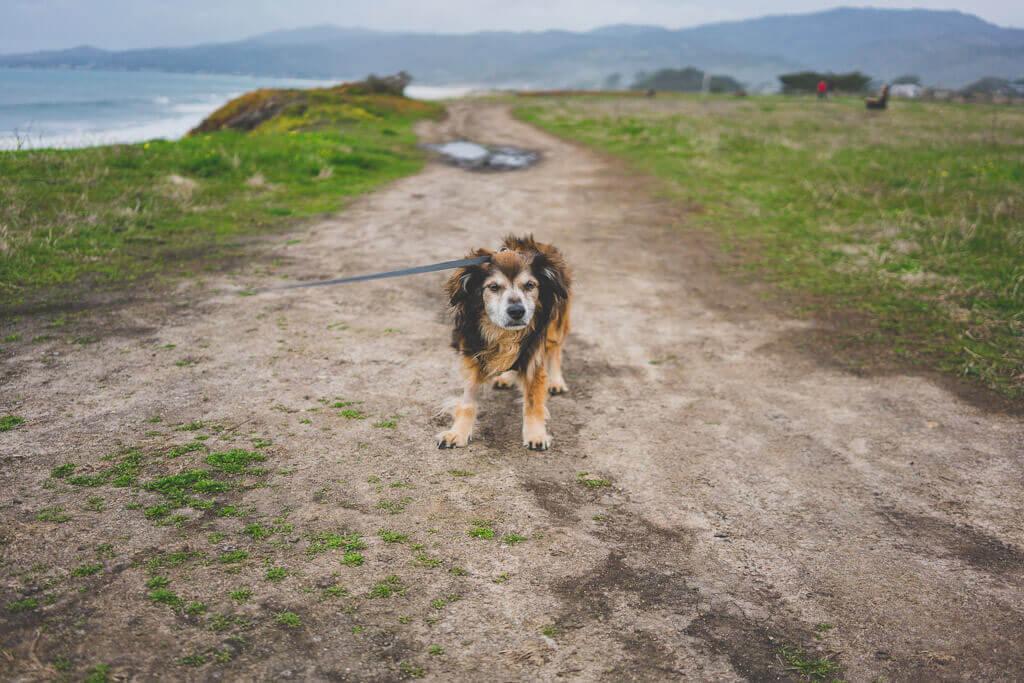 Coastal Trail in half Moon Bay is a dog friendly hiking trail in Bay Area