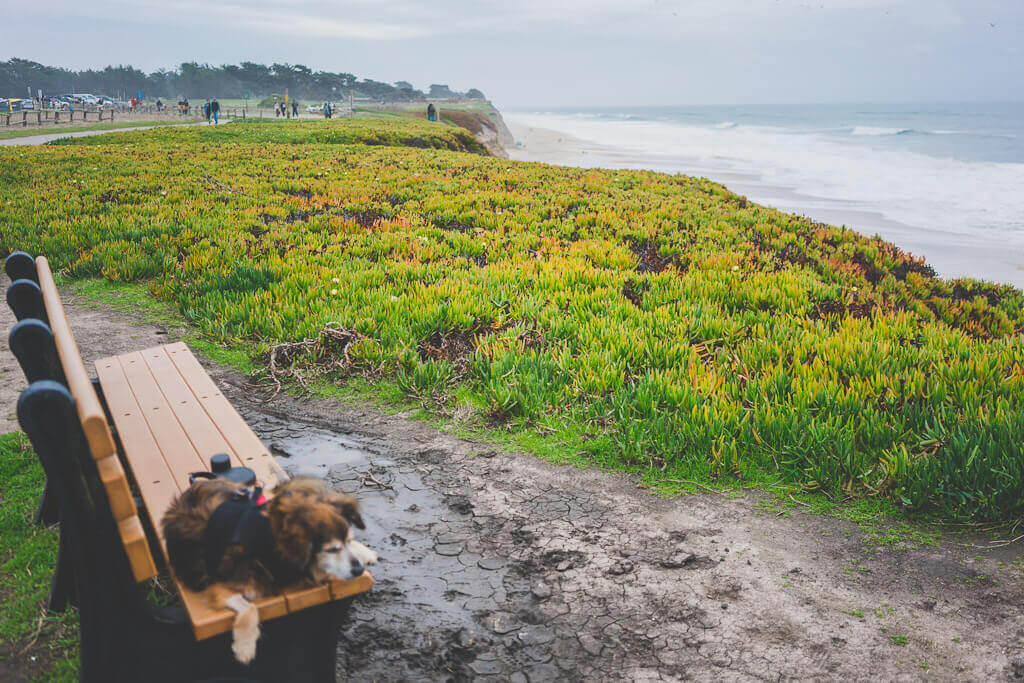 Dog friendly Half Moon Bay: Best things to do with your dog in Half Moon Bay