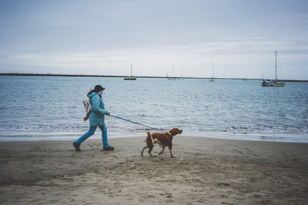 dog friendly guide to Half Moon Bay, California