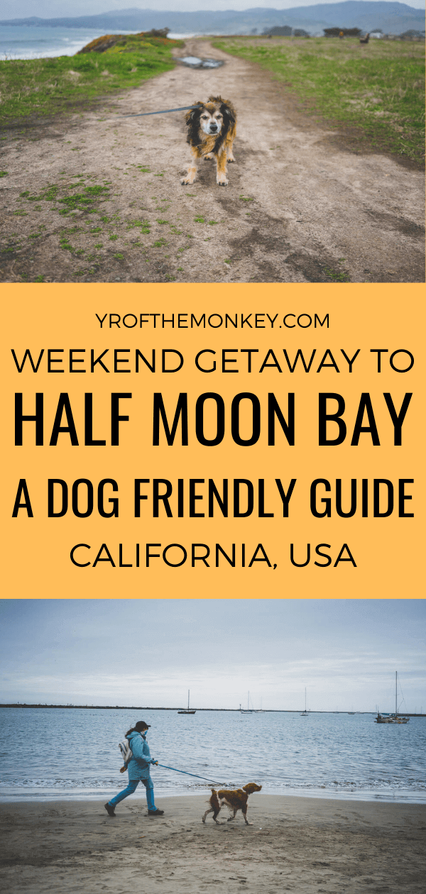 Are you looking for a fun dog friendly weekend getaway in the Bay Area? Then read this dog friendly guide to Half Moon Bay, the most charming coastal town ever in Northern California! With tons of dog friendly beaches, hikes and restaurants this is the perfect place to take your pup in the Bay Area. Pin this to your California or Pet travel board now! #California #BayArea #USA #travelwithdogs #dogfriendlyvacation #dogfriendlybeaches #dogfriendlyhiking