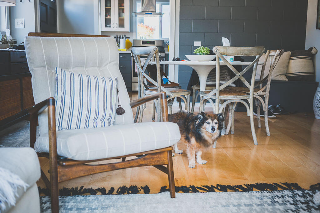 How to book a vacation rental for a dog friendly stay