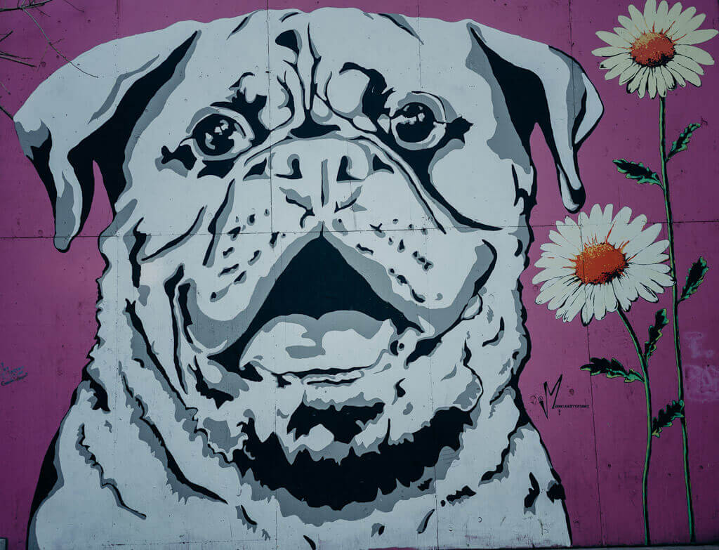 dog friendly things to do in Sacramento: self guided mural tour of the city
