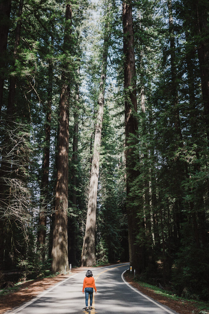 Avenue of the giants is the best part of the Redwoods road trip in Northern California