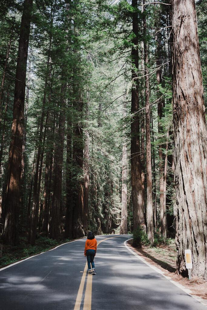 Avenue of the Giants, Humboldt County