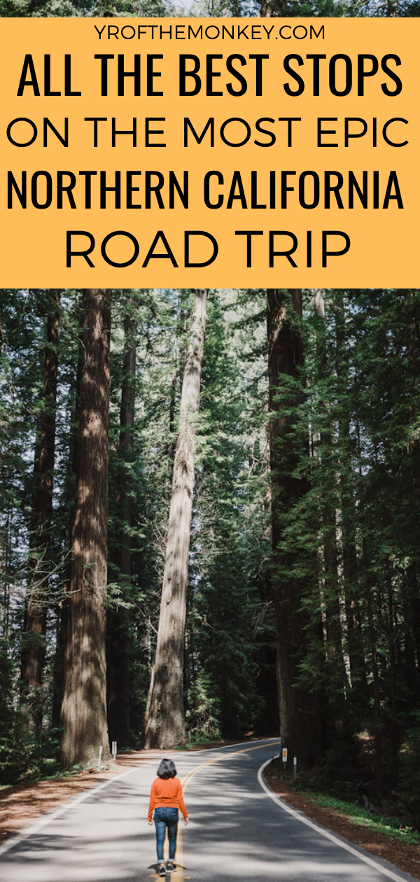Looking for an epic Northern California road trip in USA? Then read this post about driving up the Redwood Highway with all the best stops covering serene Redwood groves, Avenue of the Giants, hidden beach towns, stunning beaches, waterfalls, small towns and scenic hikes! Pin this to your USA or California board now! #USA #America #California #roadtrip #Northerncaliforniaroadtrip #Redwoodhighway #Humboldtcounty #Redwoodstateparks #Coastalredwoods