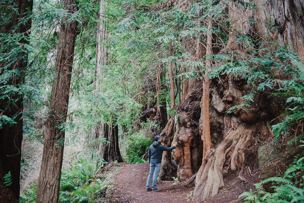 Hike to Trillium Falls, Orick