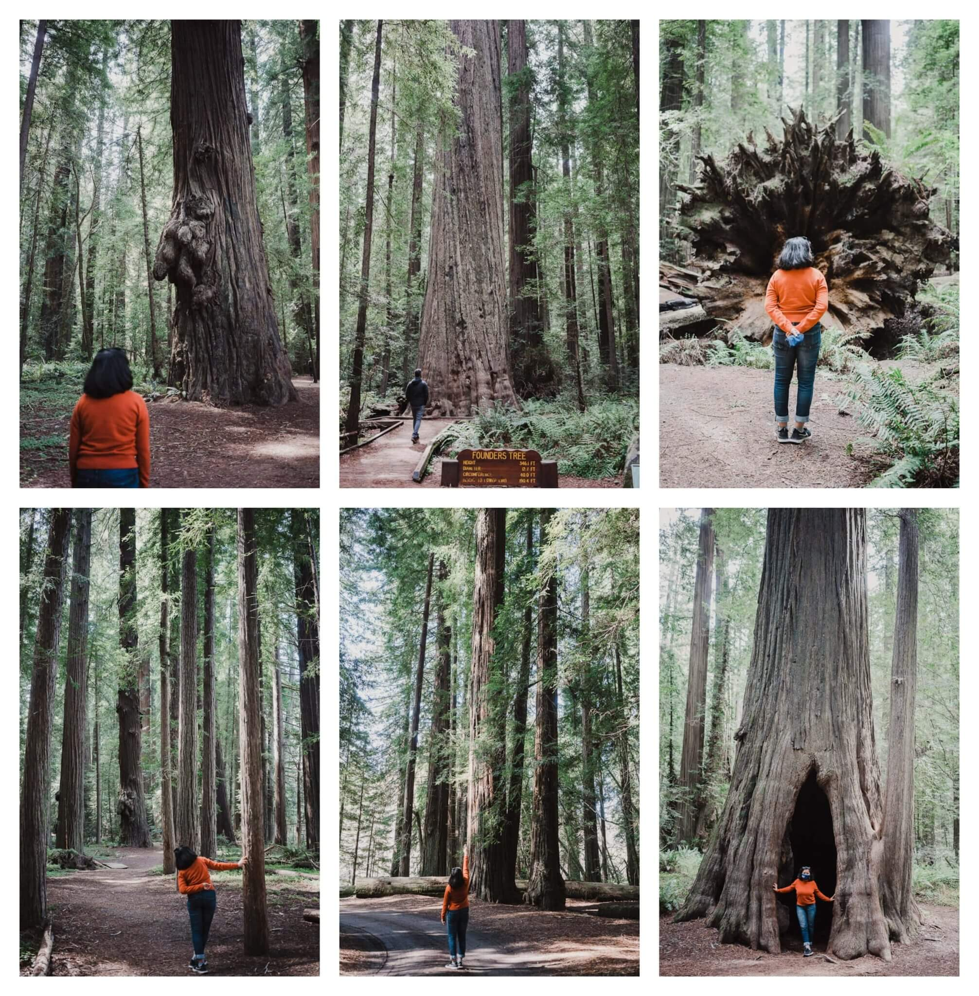 Things to do in Humboldt County: explore the Old growth Redwoods in Humboldt Redwoods State Park