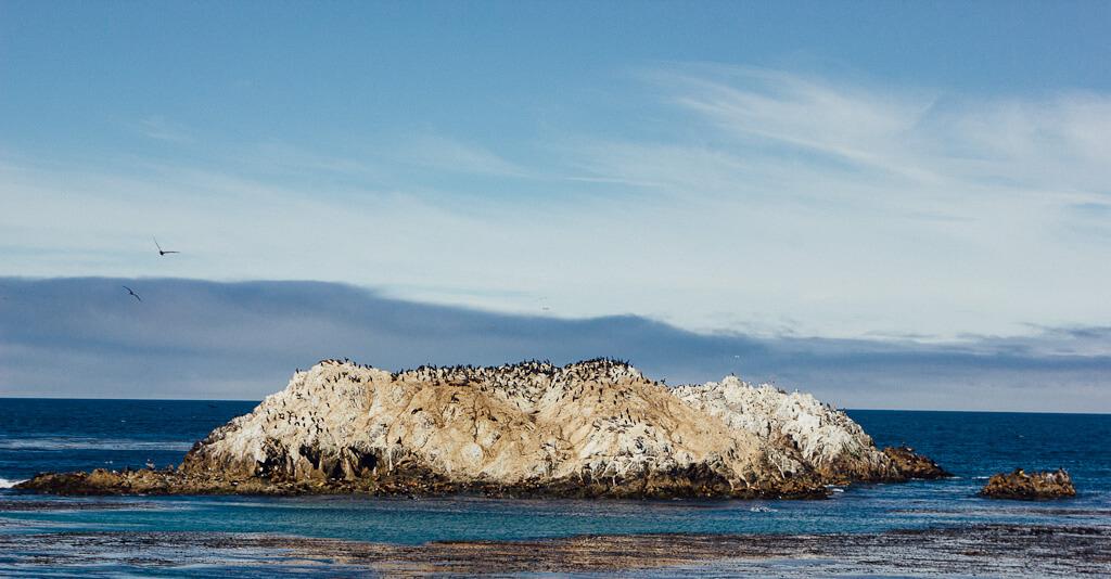 Bird Rock-17 mile drive