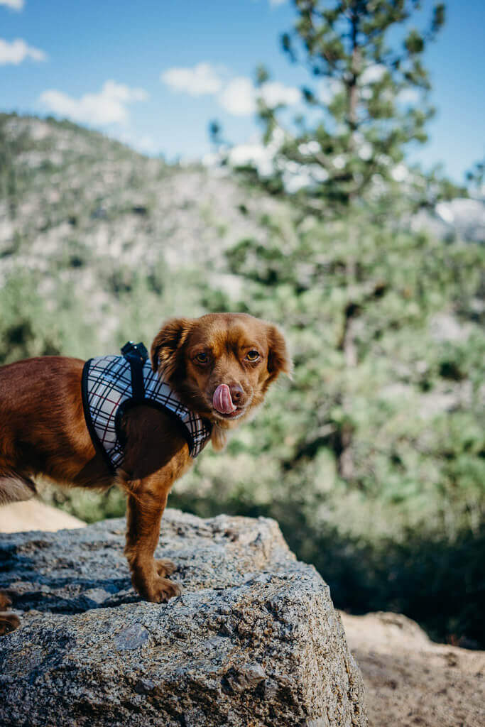 Visiting June Lake loop with your dog