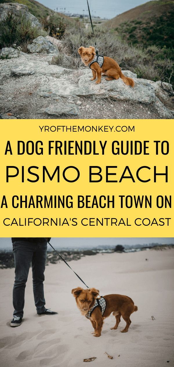 Looking to visit Pismo Beach, California with your dog? Then read this dog friendly guide to California central coast's charming beach town filled with what to do, where to stay and eat with your pups. Pin this to your California or USA or pet friendly travel board now! #dogfriendlyvacation #California #USA #America #travelwithdogs #Pismobeach #Centralcoast