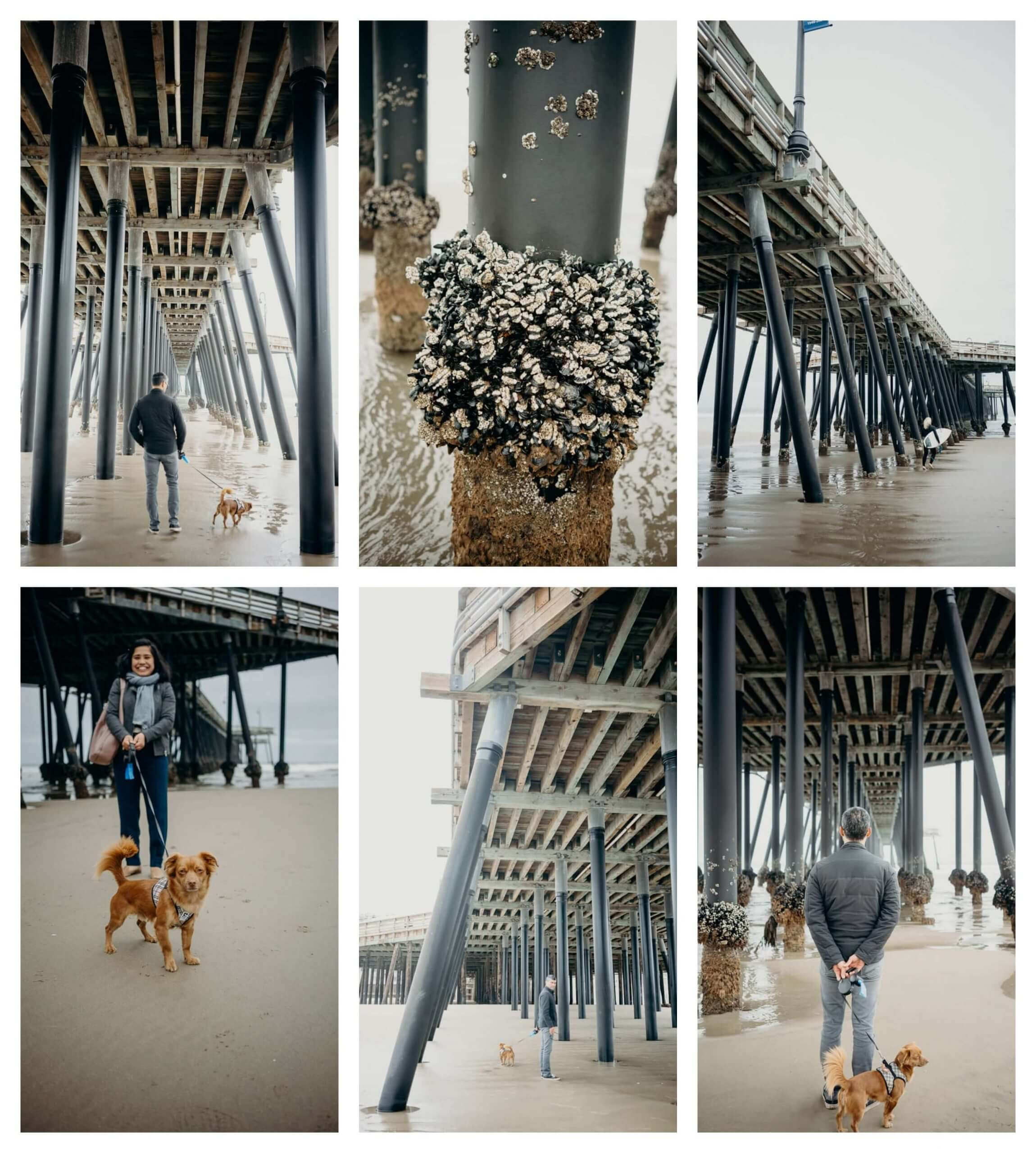Pismo Beach is a state beach that is dog friendly, Pismo beach and Pier