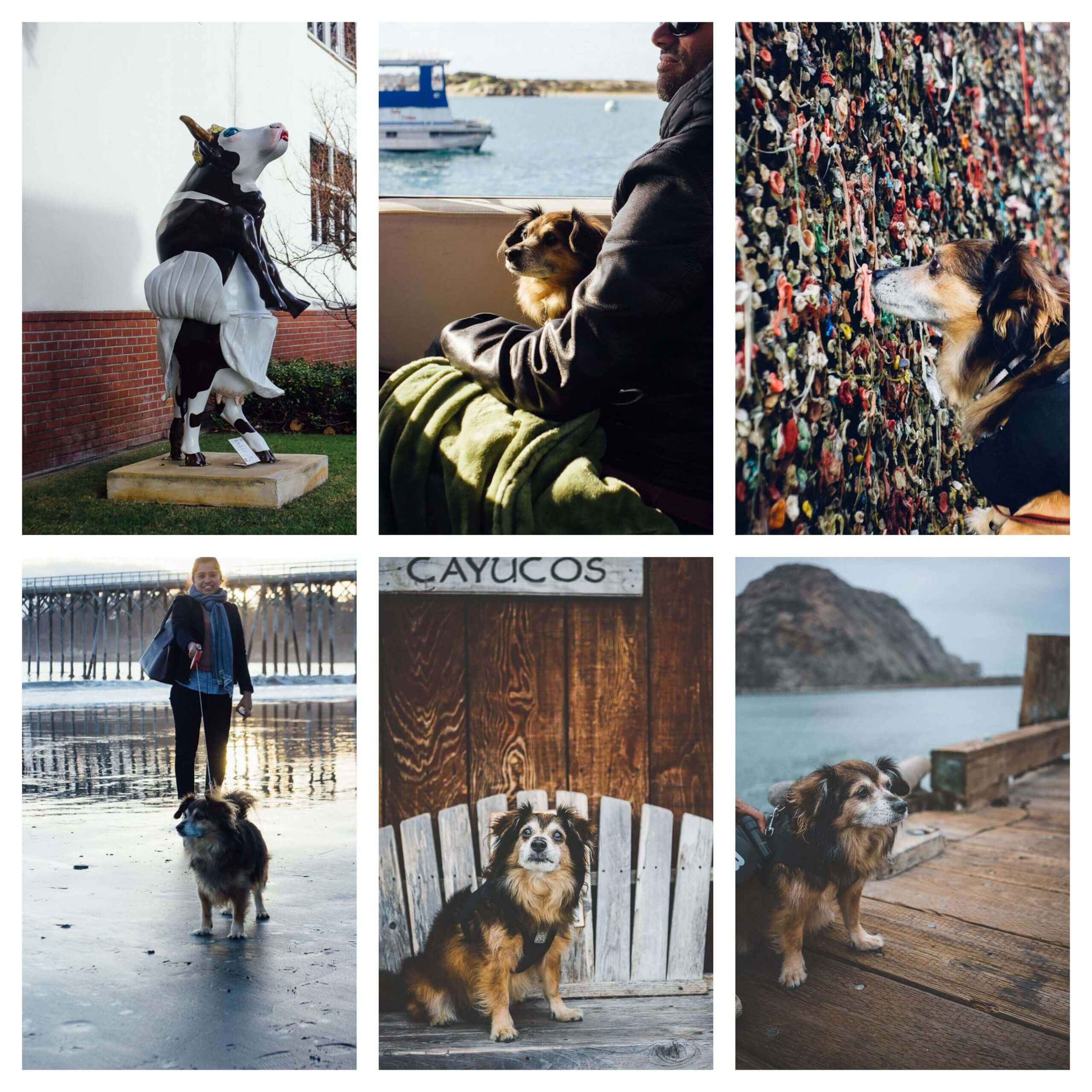 Dog friendly things to do on California's Central Coast