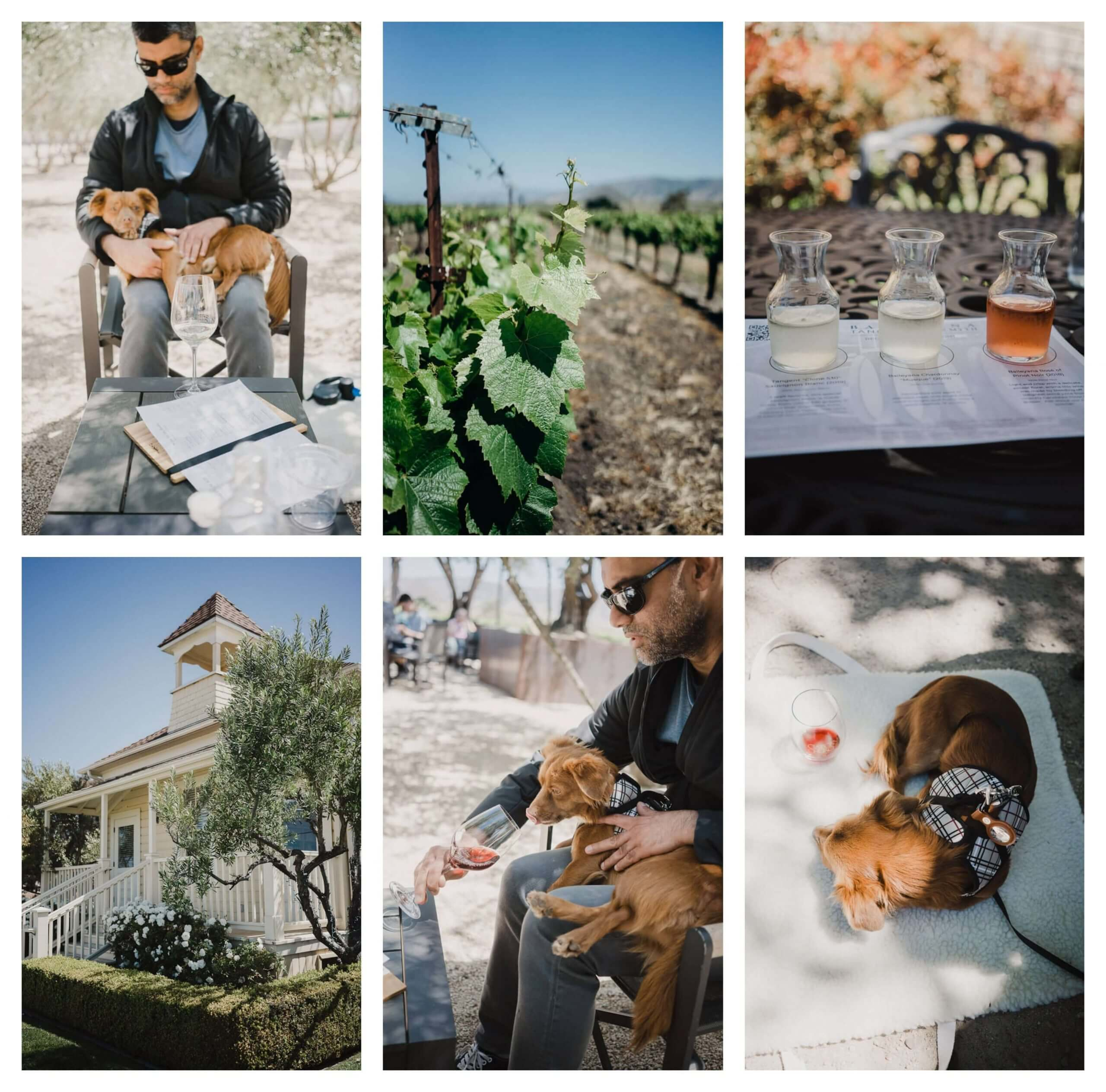 Dog friendly wine tasting and wineries at Edna Valley and San Luis Obispo