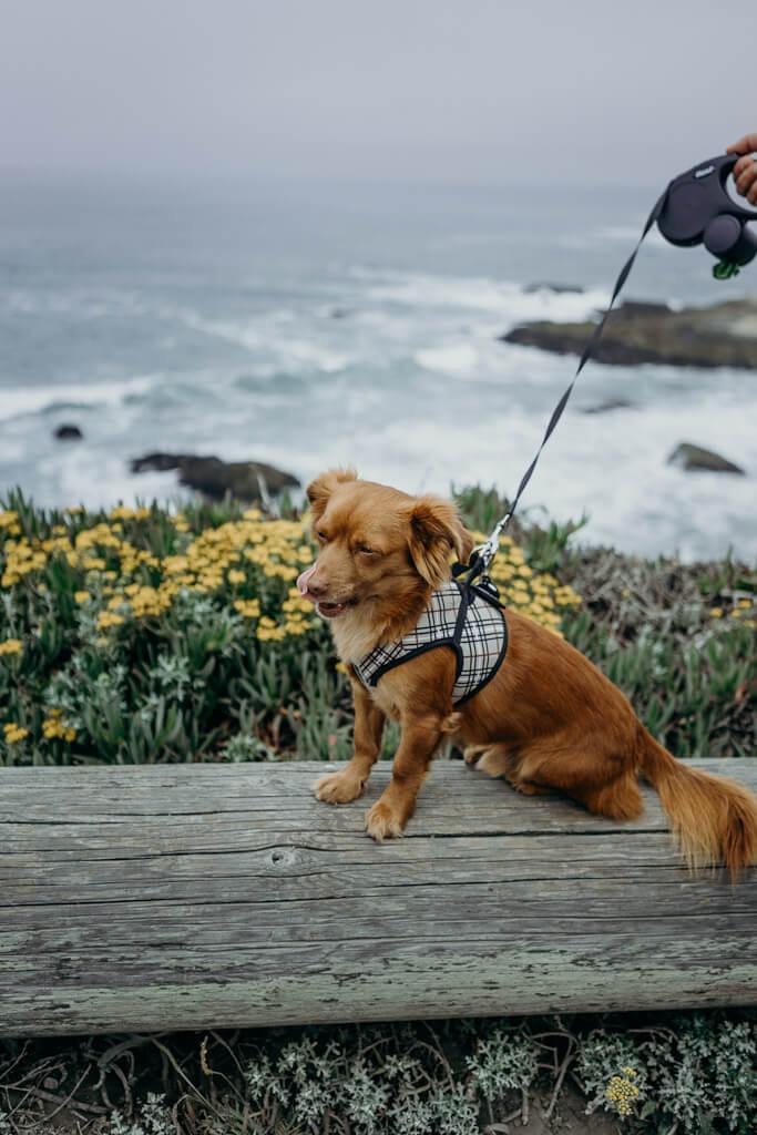 Bodega Head Trail is a scenic hike at Bodega Bay
