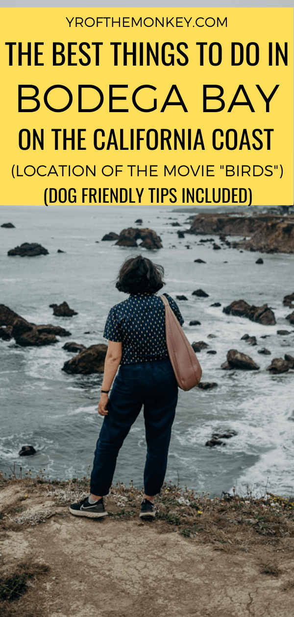 Looking for the best things to do in Bodega Bay, California on a weekend getaway? Then read this post on all the best Bodega Bay activities. Includes dog friendly tips! Pin this to your USA or California board now! #USA #California #NorthAmerica #BodegaBay #dogfriendlyvacation #travelwithdogs #Sonomacoast #Highway1