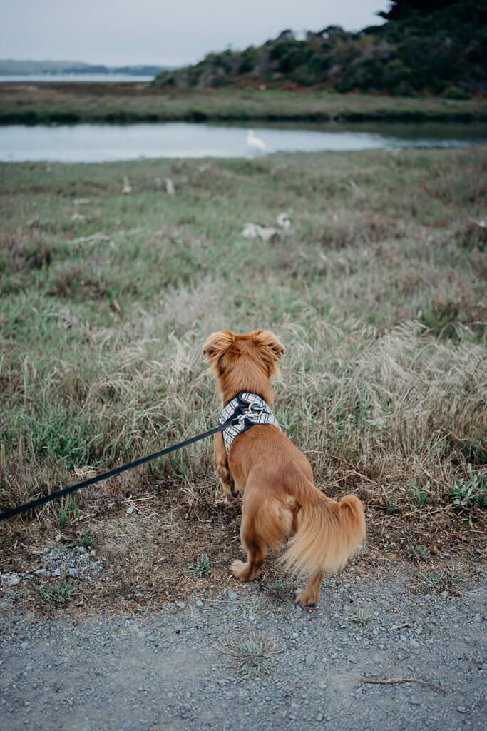Birdwalk coastal access trail is a dog friendly hiking trail in Bodega Bay