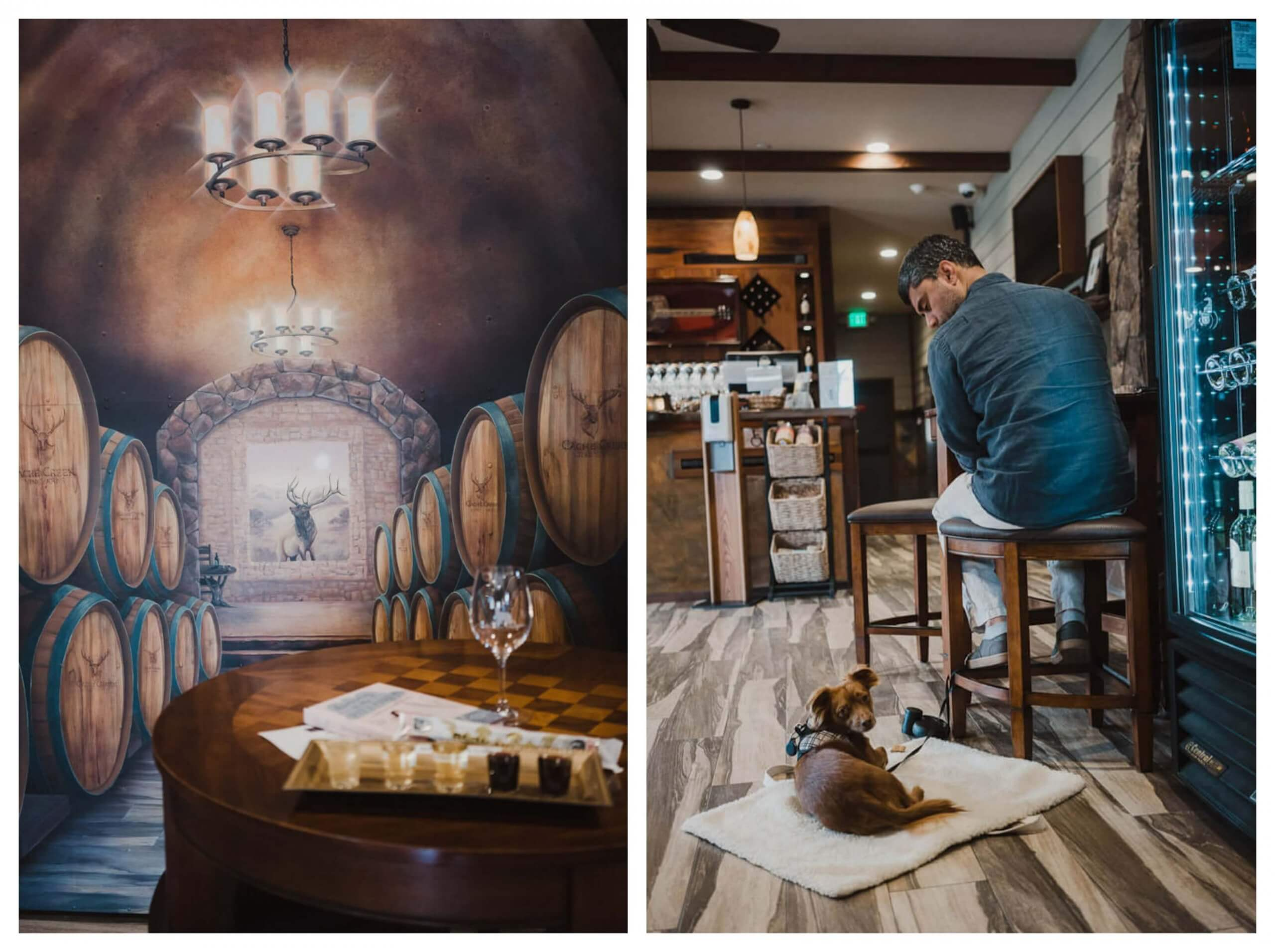 Dog friendly winery at Clear Lake: Cache Creek Vineyards and Winery