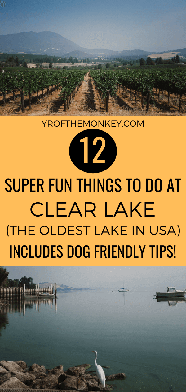 Here are 12 amazing things to do at Clear Lake, California-the oldest lake in USA! Perfect for a weekend getaway and filled with dog friendly tips, this Clear Lake itinerary guarantees a great time in Lake County. Pin it to your USA or California board now! #clearlake #California #Lakecounty #NorthernCalifornia #USA #dogfriendly #ClearlakeCA