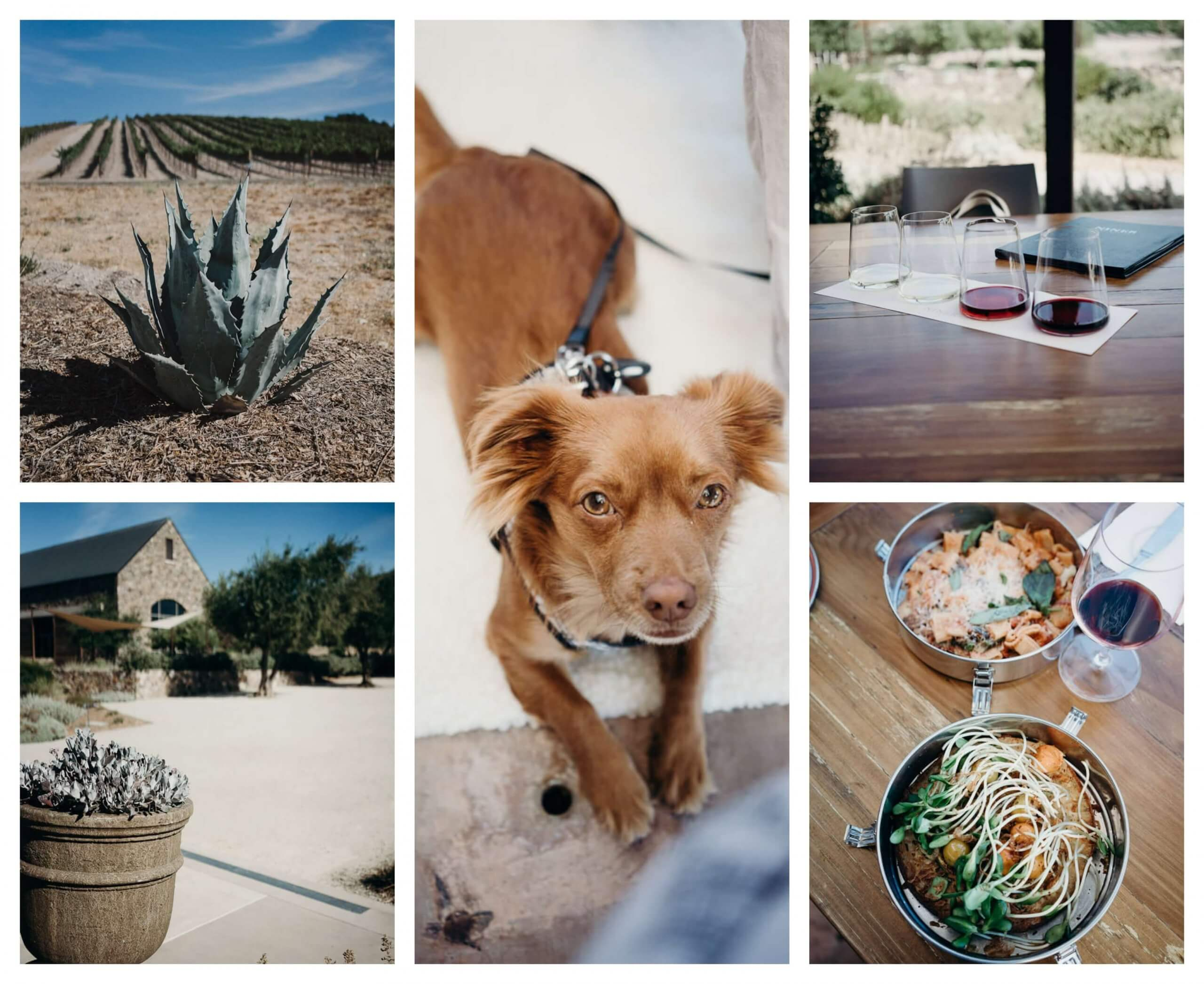 Niner Wine estates in paso Robles is a dog friendly winery