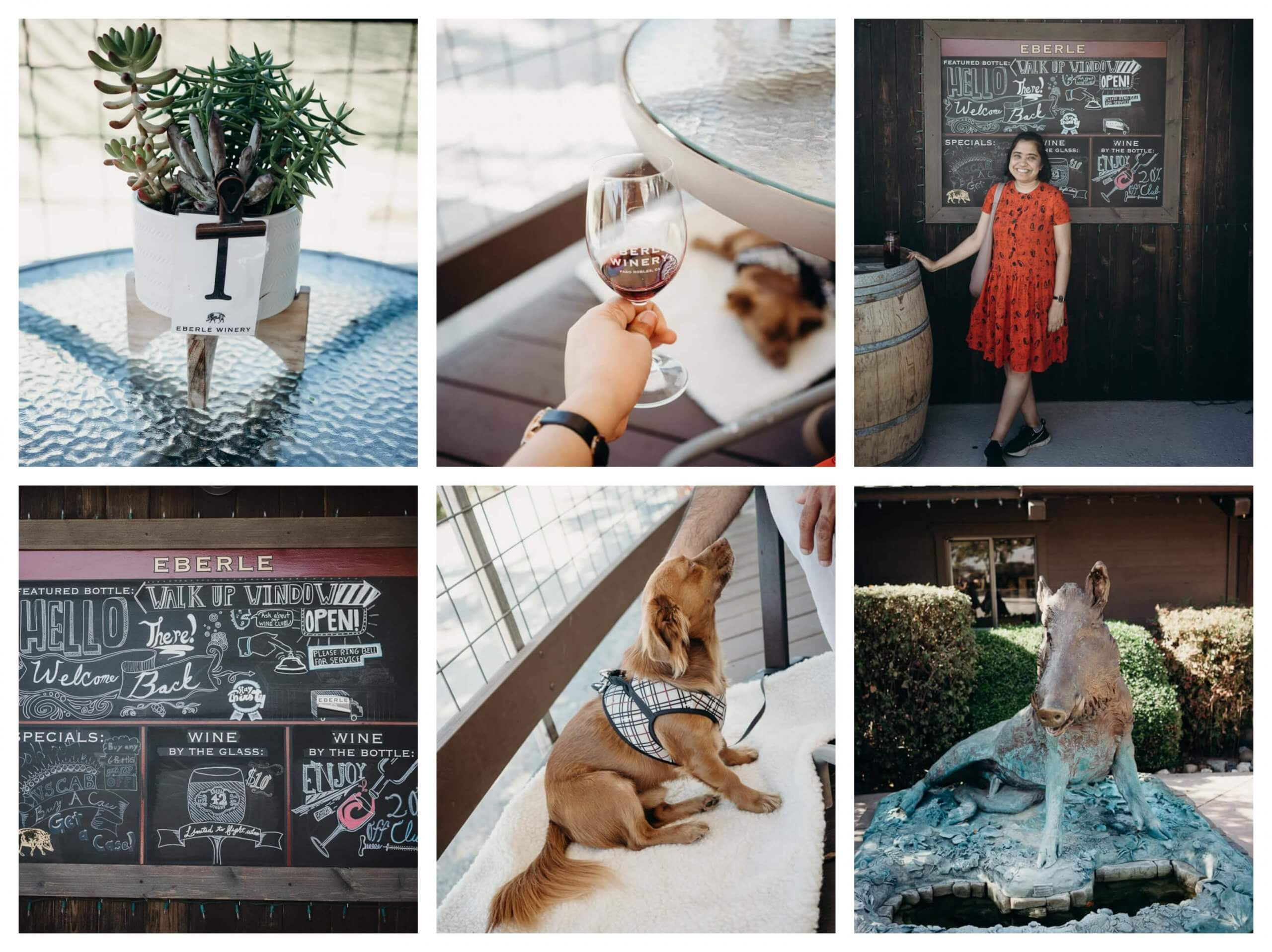 Eberle winery is dog friendly and has a winery caves tour